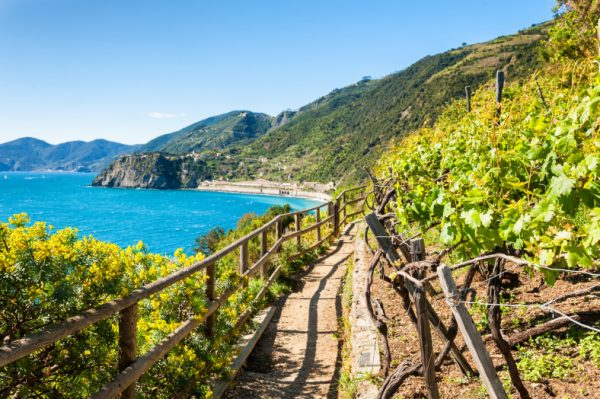 guided cinque terre tour