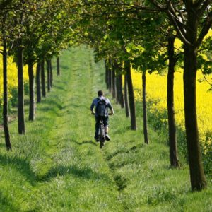ride a bike in the Tuscany countryside