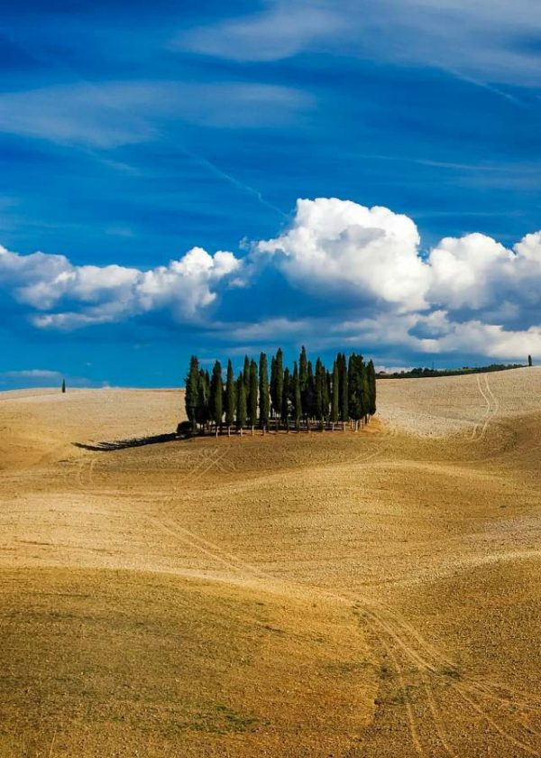 Amazing view in Tuscany: enjoy tuscany tour