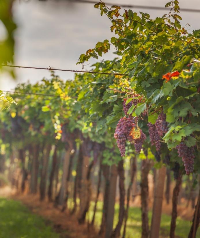Wine taste_ Fiesole hiking tour