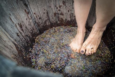 grape stomping wine tour